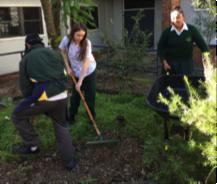 Three Merrylands High School students digging in ground and raking.